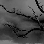 My Raging Storm